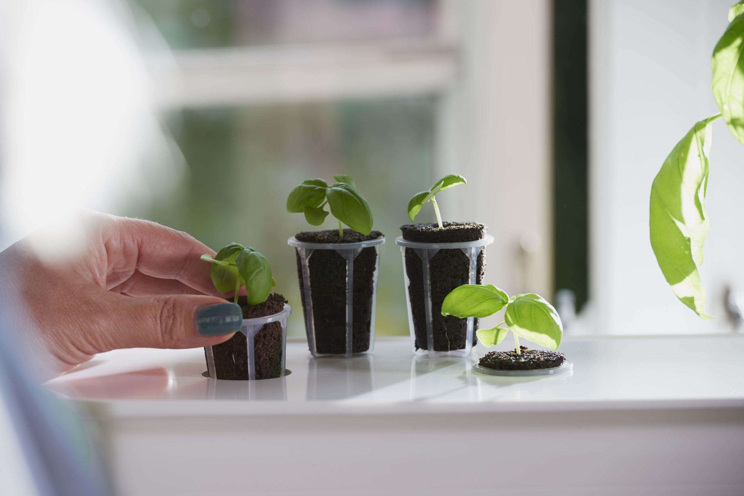growbox-plug