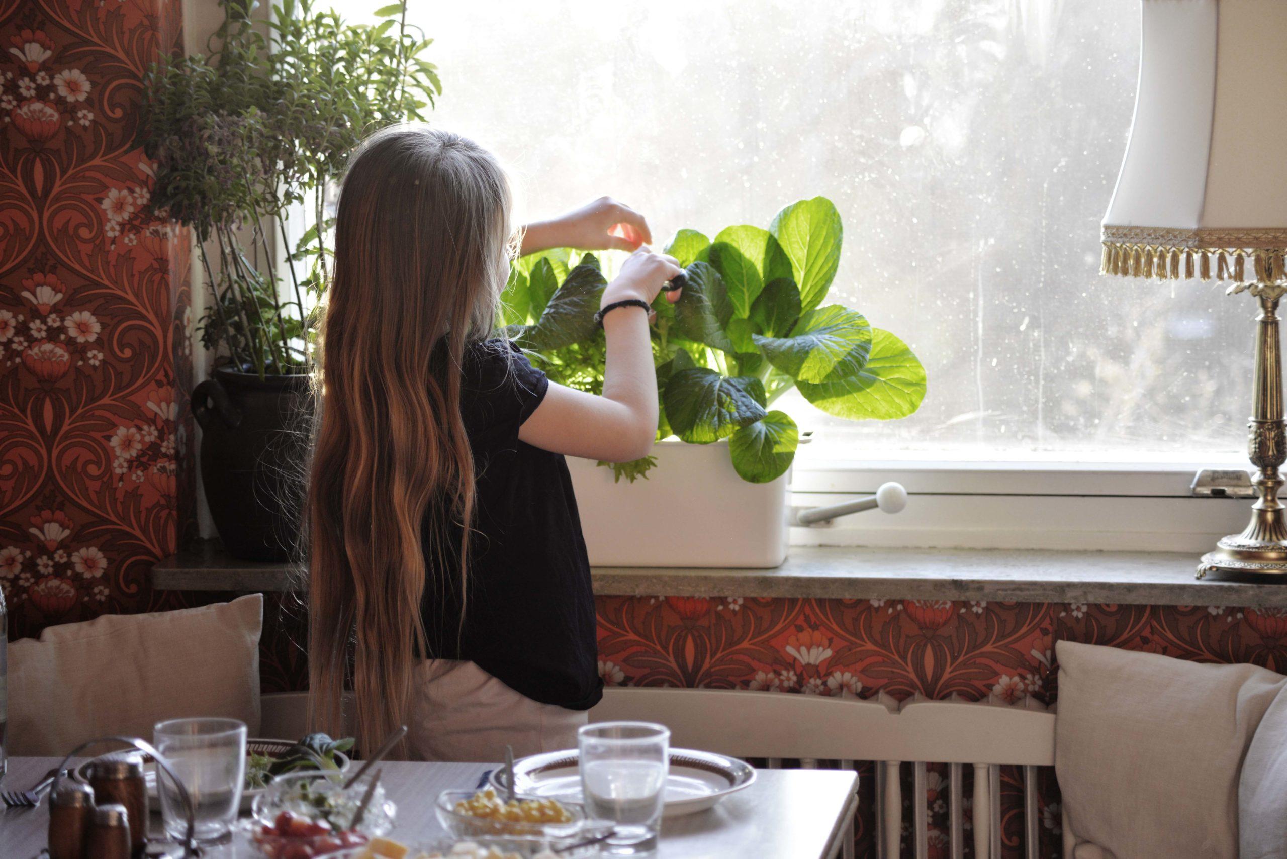 grow-water-hydroponics